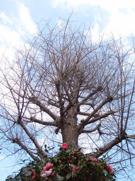 春よ来い♪_f0158364_16124555.jpg