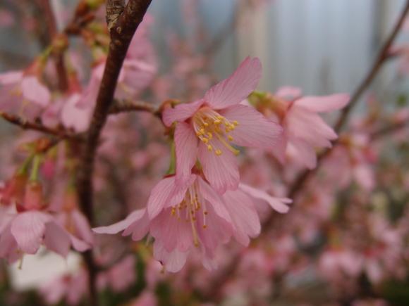 春よ来い♪_f0158364_16131197.jpg