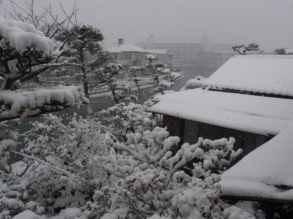 春よ来い♪_f0158364_16160258.jpg