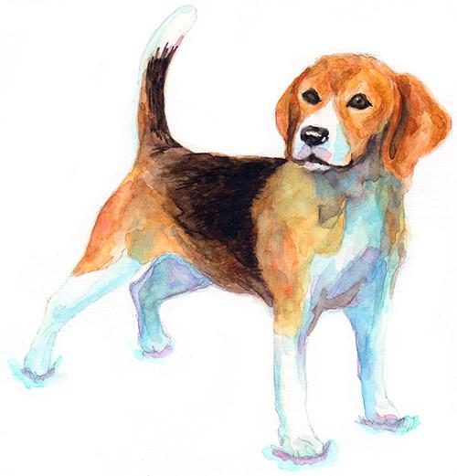 Beagle_b0156872_17253179.jpg