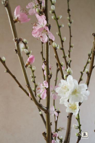 お雛様と一緒に白もピンクも桃の花_c0128489_19221270.jpg