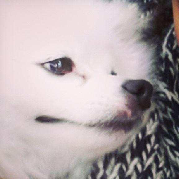 Rain中国のバラエティ番組撮影 白衣を着たり髪の毛をカットしたり_c0047605_11223033.jpg