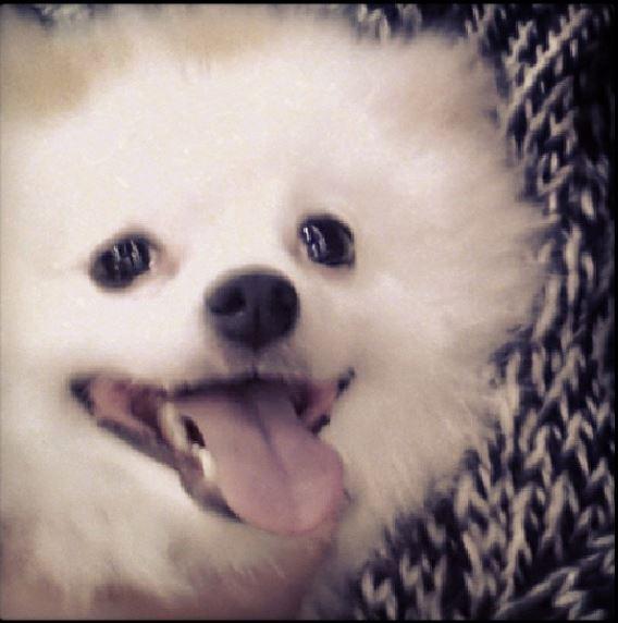 Rain中国のバラエティ番組撮影 白衣を着たり髪の毛をカットしたり_c0047605_11224637.jpg