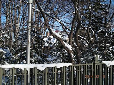 伊藤邸の敷地_f0078286_14302740.jpg