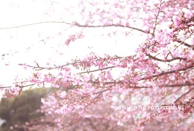 あの木は、 ミモザ。_d0220593_20311740.jpg