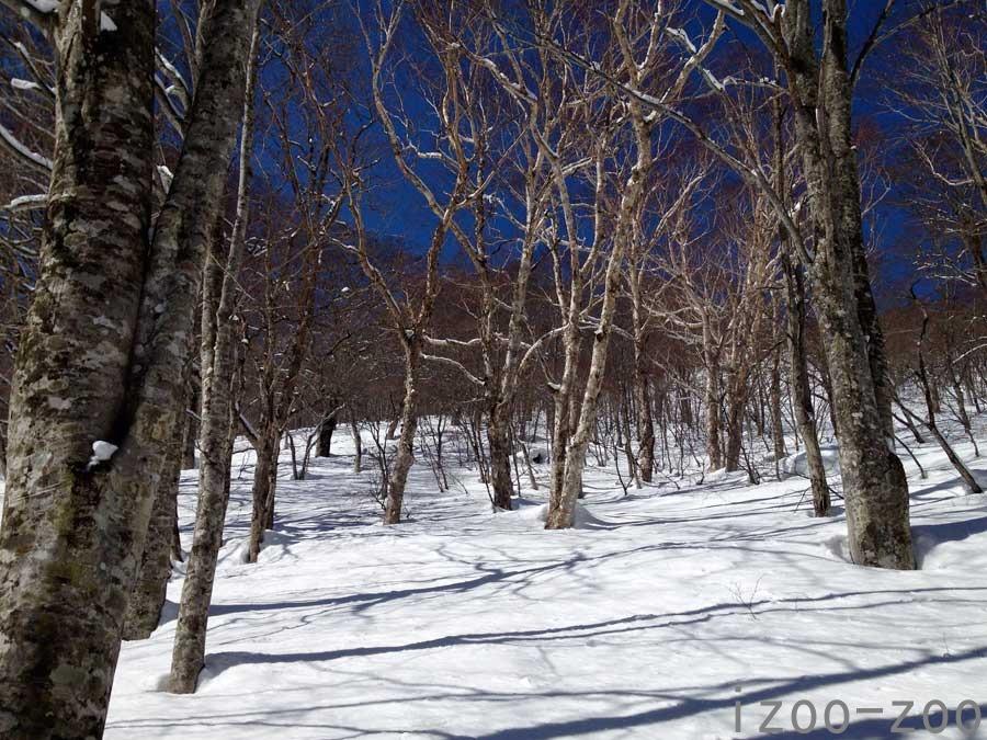 お試しスノーハイキング♪_c0223095_15231299.jpg