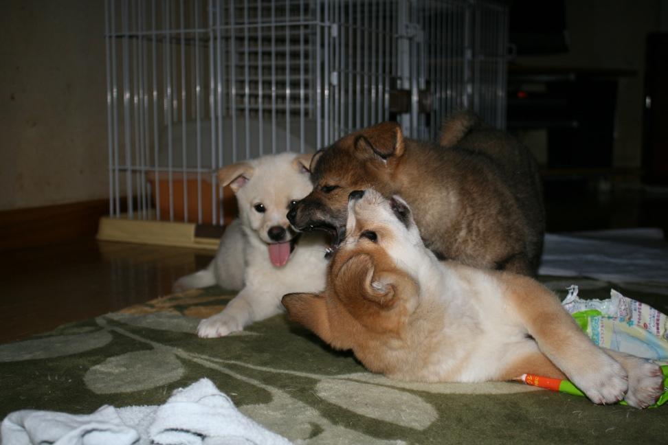 根菜3兄弟!(ゆり&ぽてと&さと)_f0242002_0362318.jpg