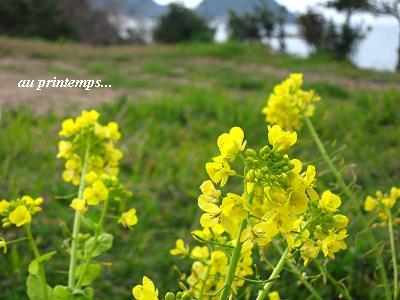 春の海☆早春のおもてなしに癒される・・・♪_c0098807_2014404.jpg
