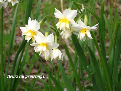 春の海☆早春のおもてなしに癒される・・・♪_c0098807_20155994.jpg