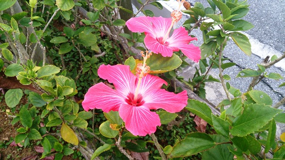 沖縄にて_f0221707_21322966.jpg