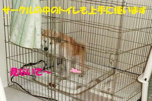 f0121712_653265.jpg