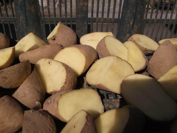 ジャガイモ種芋を切りました。_b0137932_1275864.jpg