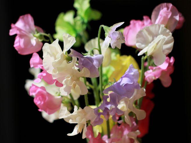 春色スイトピー_a0256349_233121100.jpg