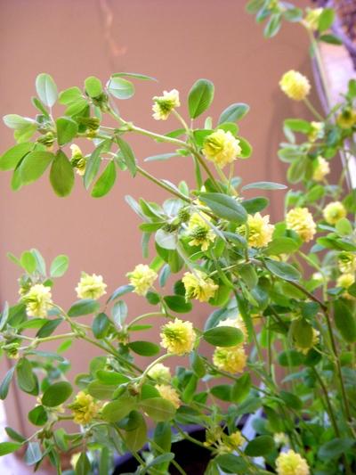 懐かしの草花。。。_a0229658_181840.jpg