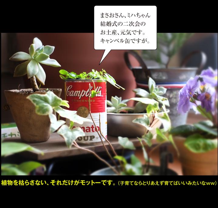 b0315480_2139872.jpg
