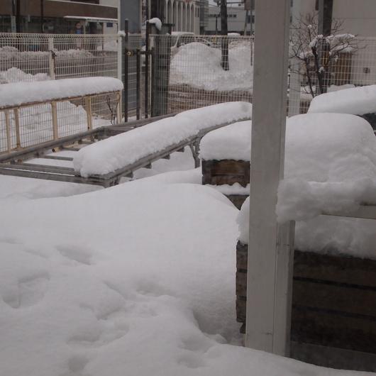 また雪が降りましたね。。。_a0292194_12141764.jpg