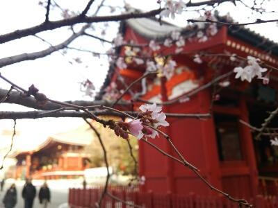 2月19日は日帰りバスツアー(浅草寺と仲見世)_a0155999_1229348.jpg
