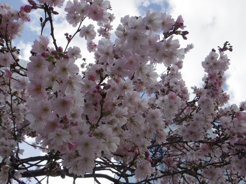 チュイルリー公園でピクニックランチとお散歩とラデファンスの桜_e0123104_521982.jpg