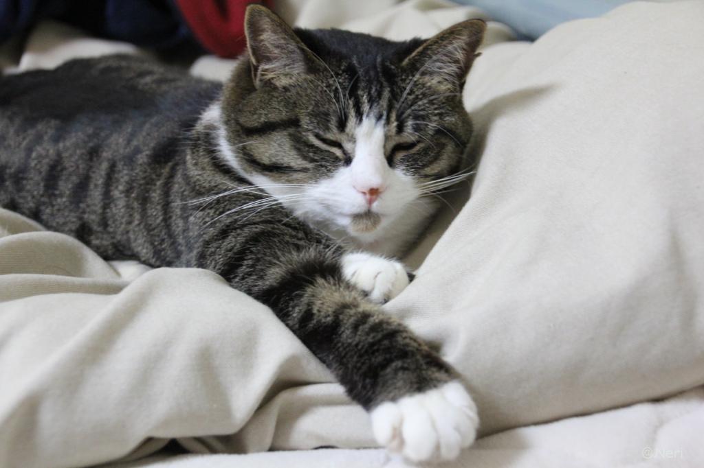 【猫】おねむと元気_f0141609_0341926.jpg