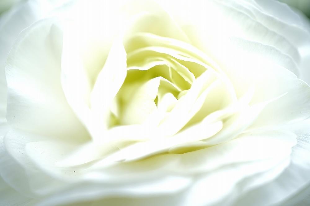 Flower of march♪_b0297818_22472440.jpg