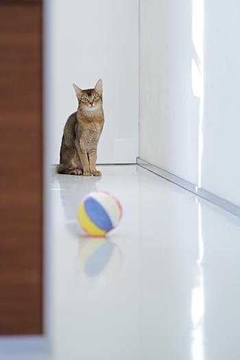 [猫的]紙風船_e0090124_231159.jpg