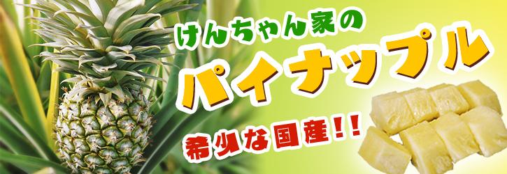 熊本産パイナップル 『菊池・七城産 けんちゃん家のパイナップル』販売スタート!!_a0254656_1829831.jpg