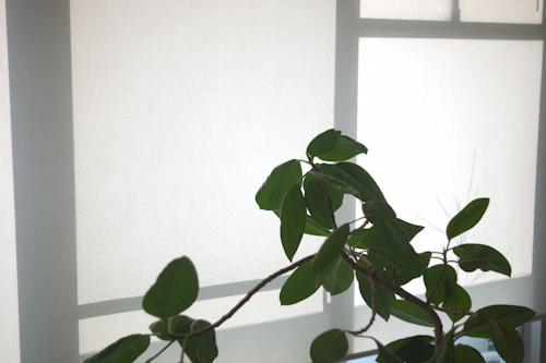 140306 観葉植物_b0129659_8431021.jpg