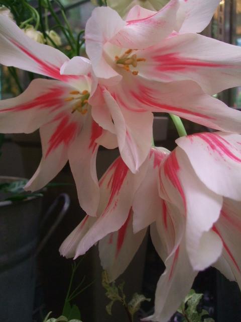 オークリーフ花の教室(赤地さんと宮原さんの作品)_f0049672_1744971.jpg