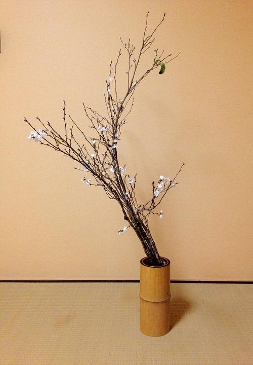 寒桜の生花_b0248803_22255599.jpg