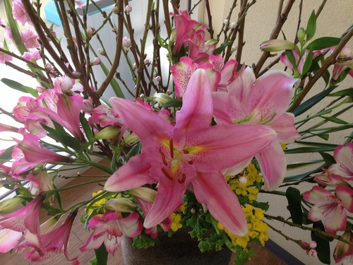 今週のお花とセール情報_a0200423_19244588.jpg