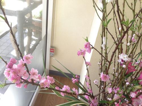 今週のお花とセール情報_a0200423_19253756.jpg