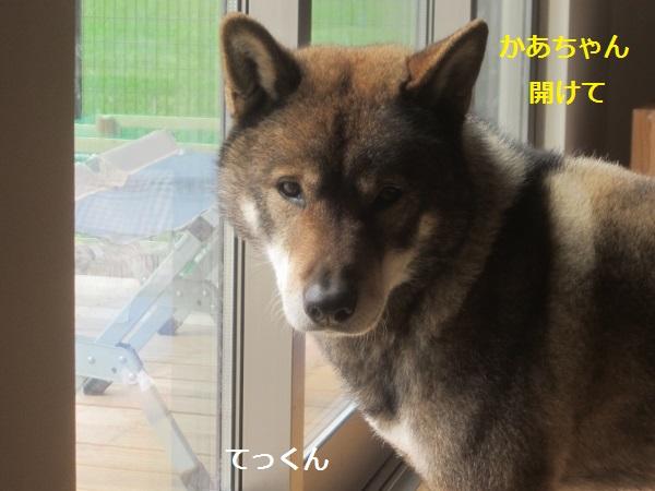 f0143123_20111565.jpg