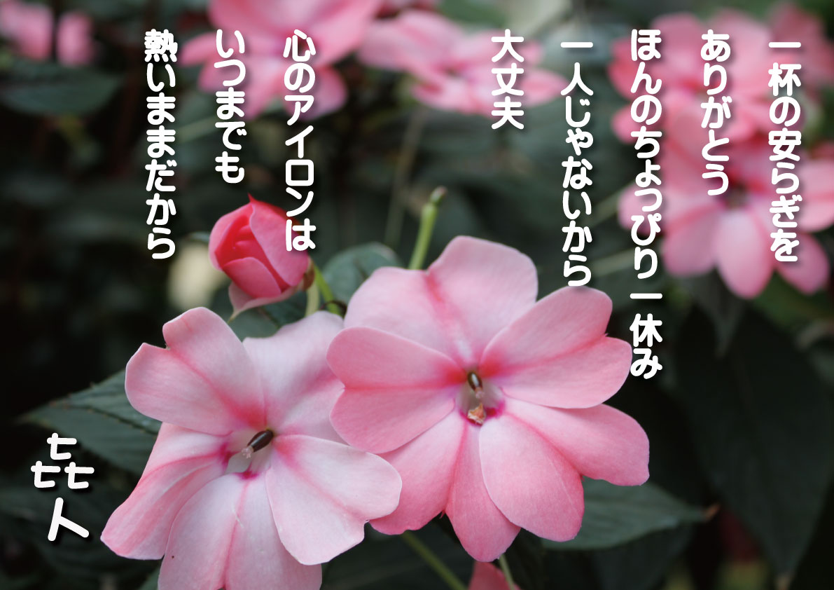 d0227044_1626378.jpg