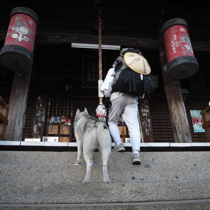 Memory of the second pilgrimage with husky HANA II_c0049299_2102057.jpg