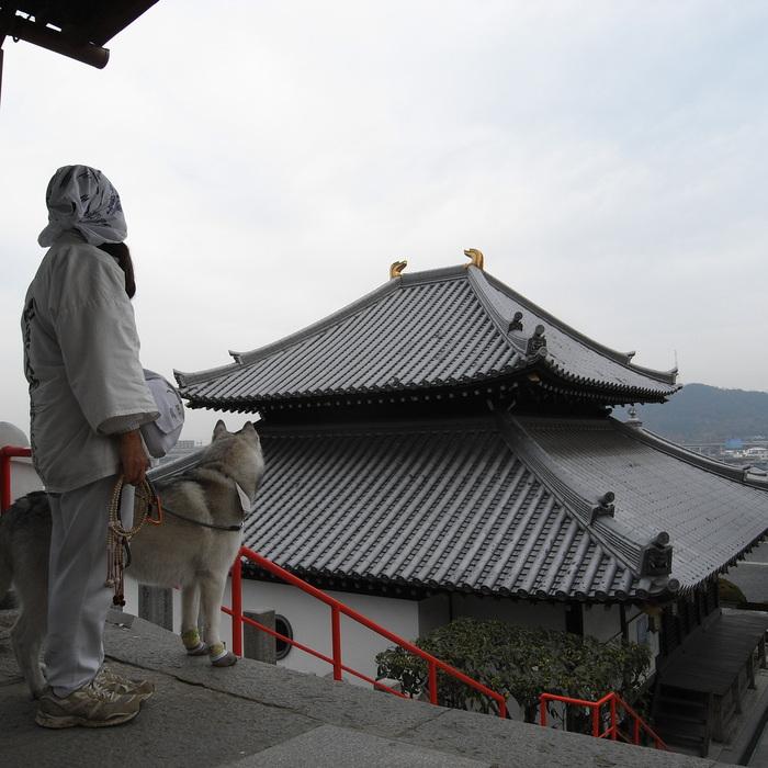 Memory of the second pilgrimage with husky HANA II_c0049299_21142322.jpg