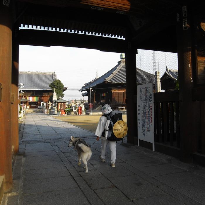 Memory of the second pilgrimage with husky HANA II_c0049299_2123631.jpg
