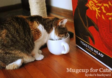 猫用になったマグカップ_b0253205_344957.jpg