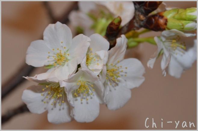 花は咲く_e0219011_12421752.jpg