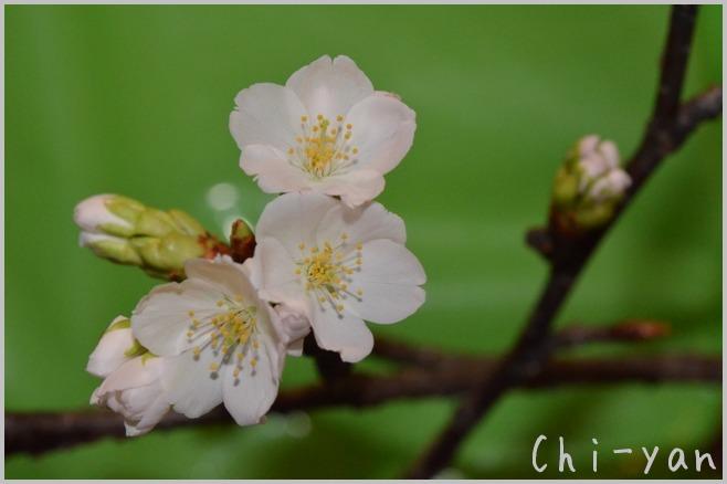 花は咲く_e0219011_12424786.jpg