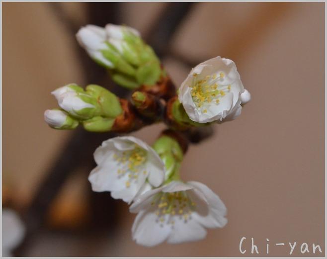 花は咲く_e0219011_1242788.jpg