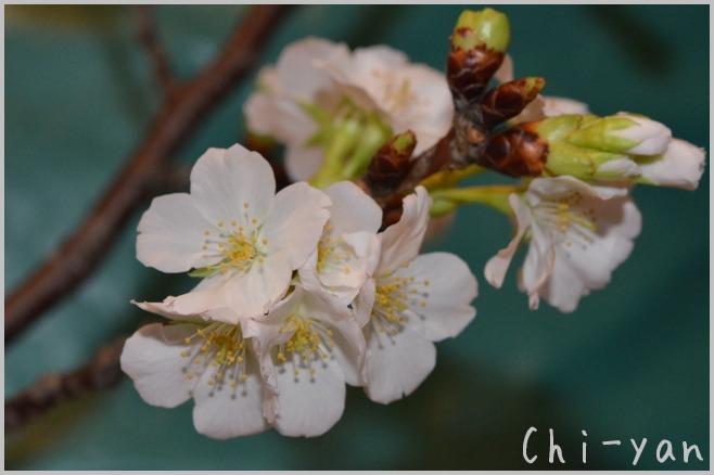 花は咲く_e0219011_12431915.jpg
