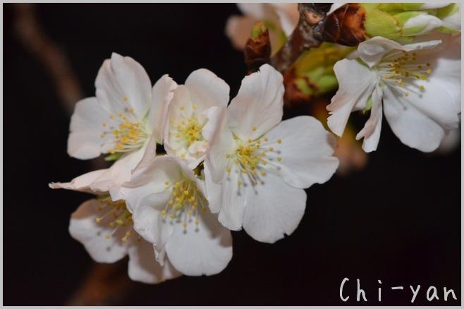 花は咲く_e0219011_12432832.jpg