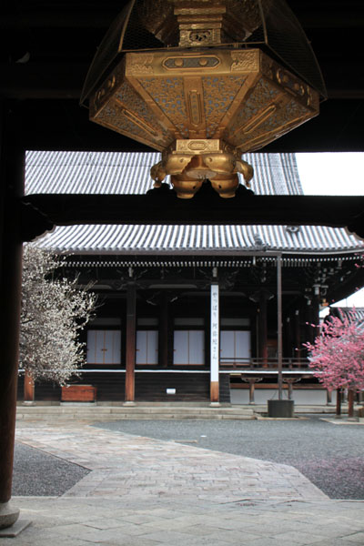 興正寺 紅白そろい咲き_e0048413_1725012.jpg
