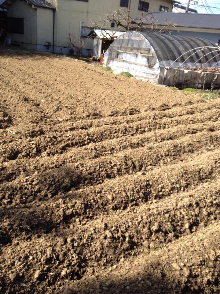 明日はJET農園です!_a0164918_1929133.jpg