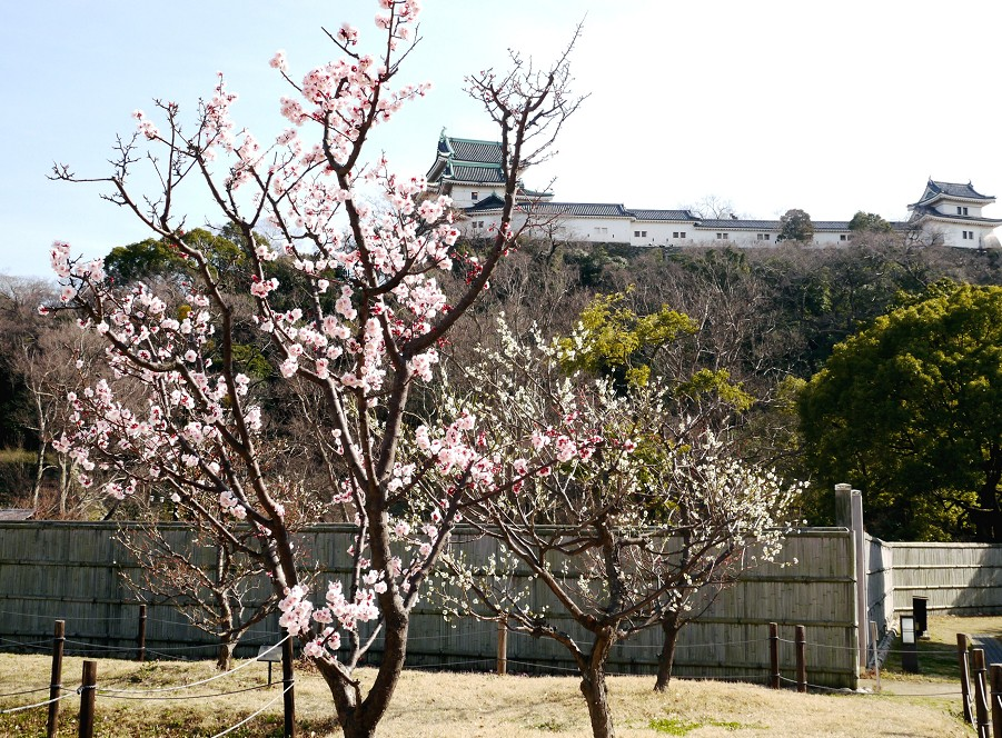 春の便り_b0093754_19545126.jpg
