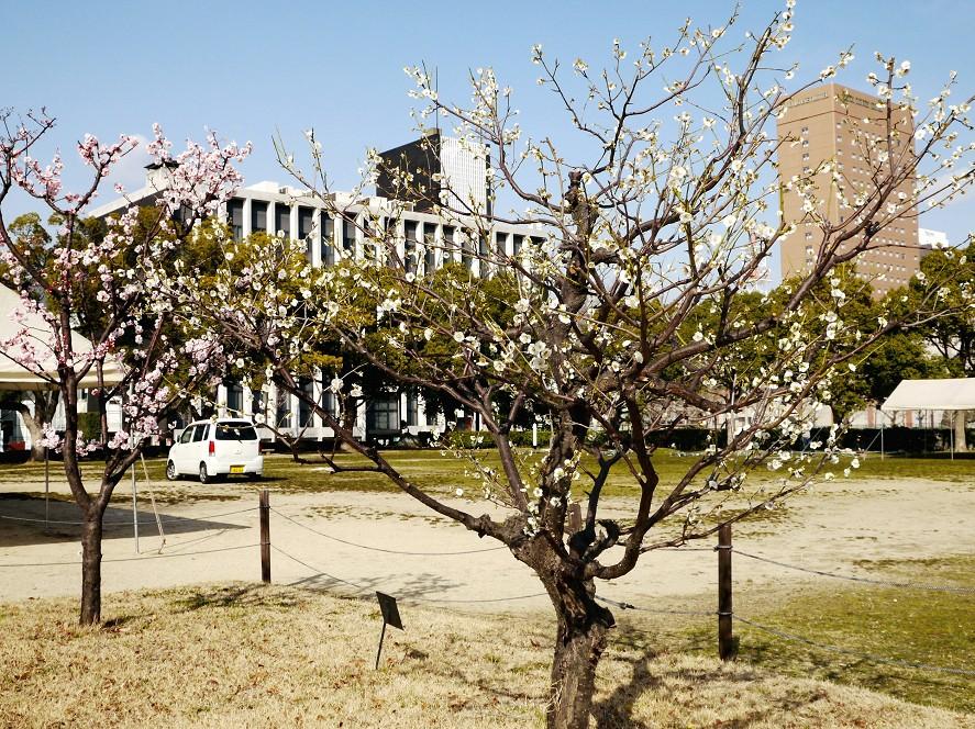 春の便り_b0093754_19545985.jpg