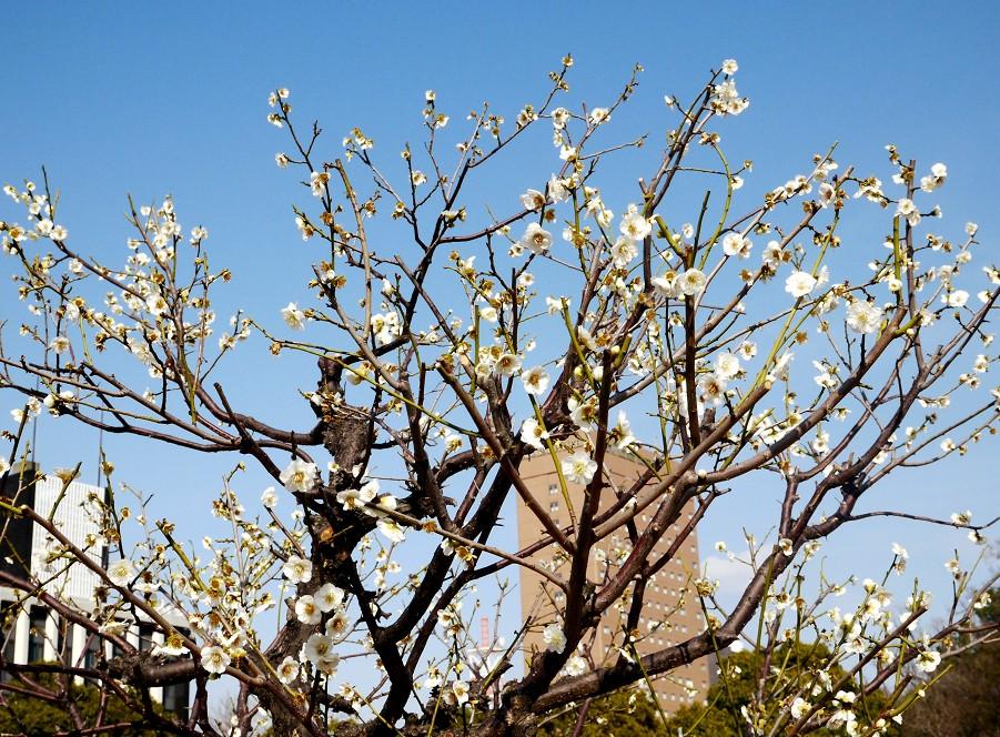 春の便り_b0093754_1955921.jpg