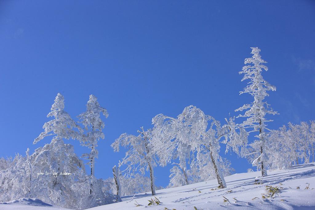 青空と樹氷より~_a0039860_20274256.jpg