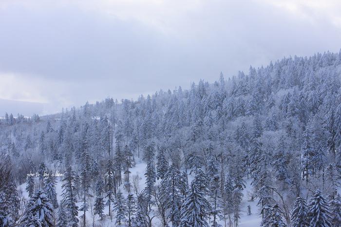 青空と樹氷より~_a0039860_20275766.jpg