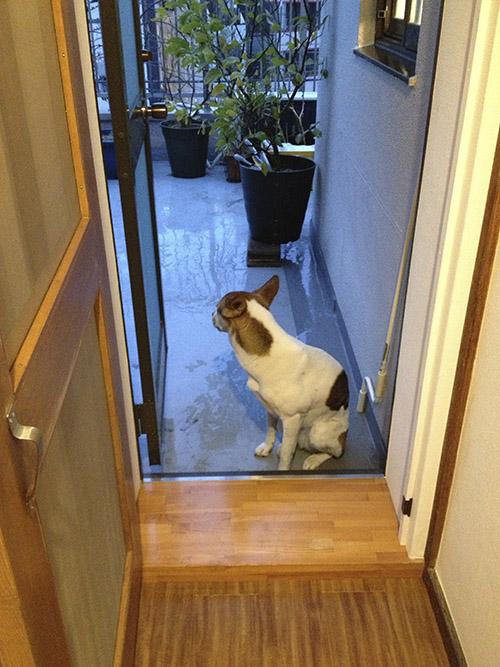 雨だけどお外で遊びたい犬_b0156872_16295738.jpg